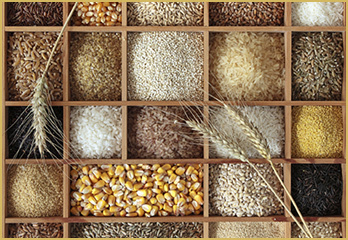 various types of Whole Grains